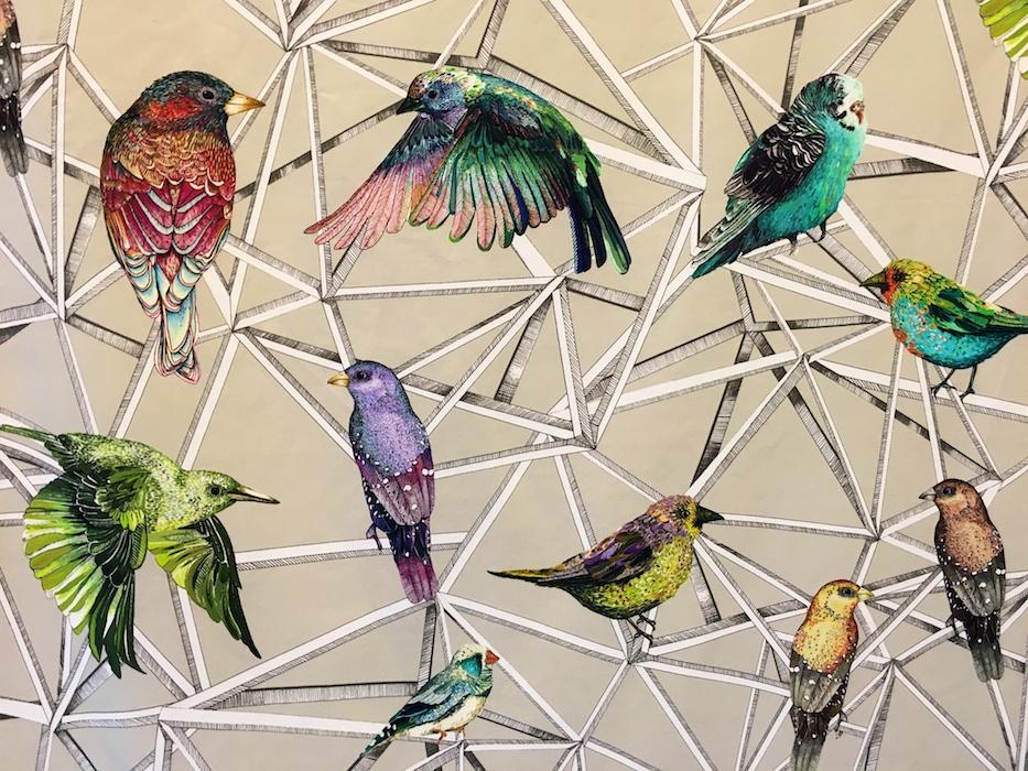 Beautiful birds! Osborne & Little
